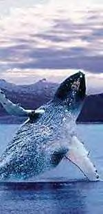 Whale watching is exciting in Alaska!